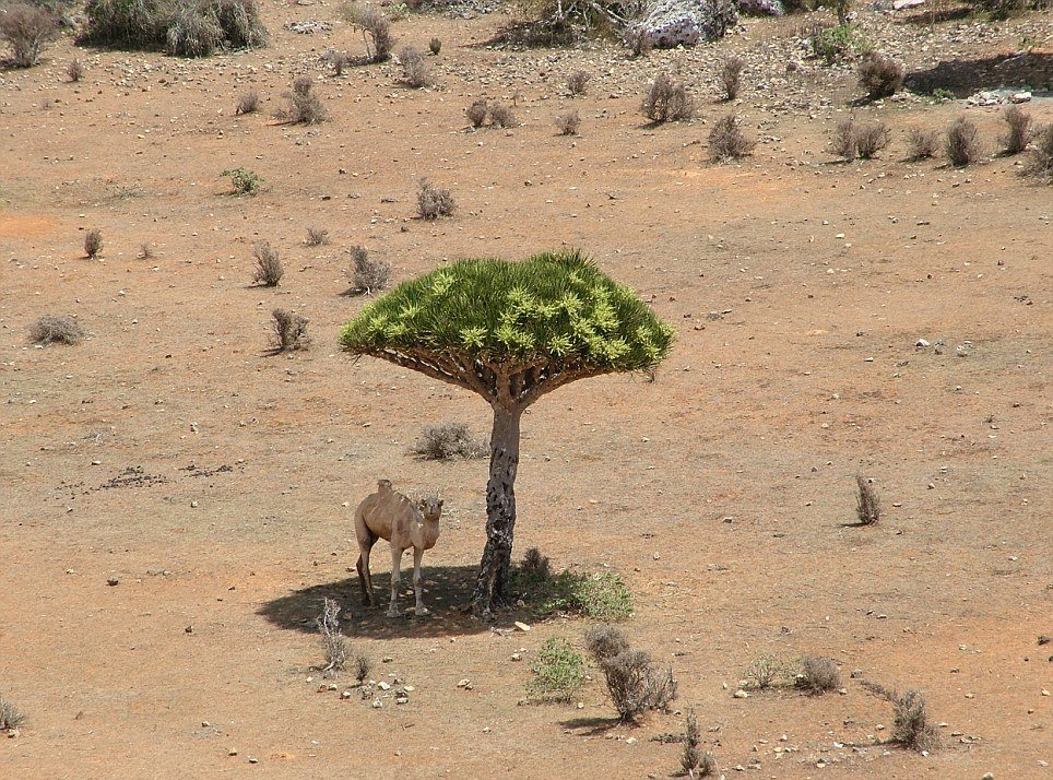 Mushroom trees only found on one island