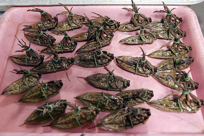 food-as-insects (11)[2]