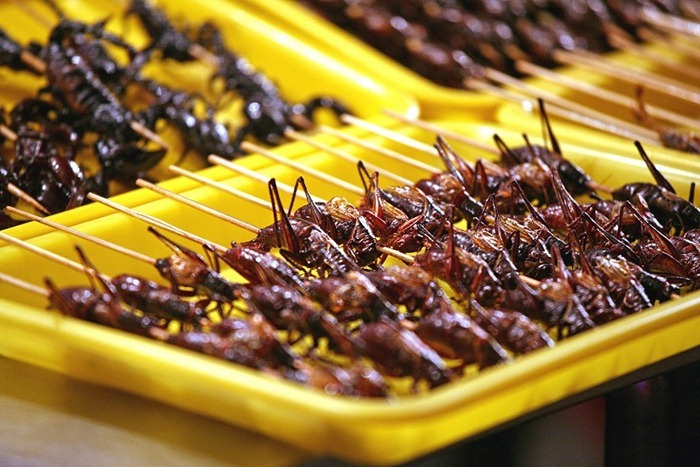 food-as-insects (2)[2]