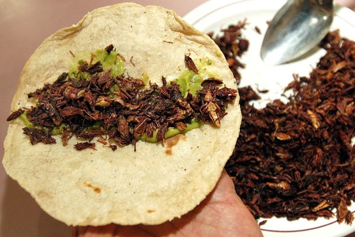 food-as-insects (3)[2]