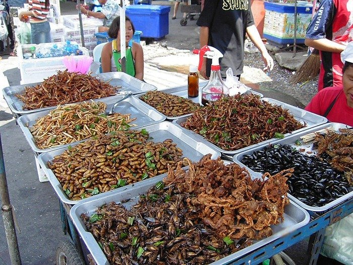 food-as-insects (8)[2]