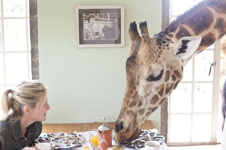 giraffe-manor-0[2]