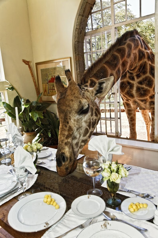 giraffe-manor-10[2]