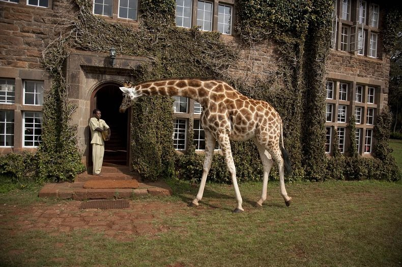 giraffe-manor-12[2]