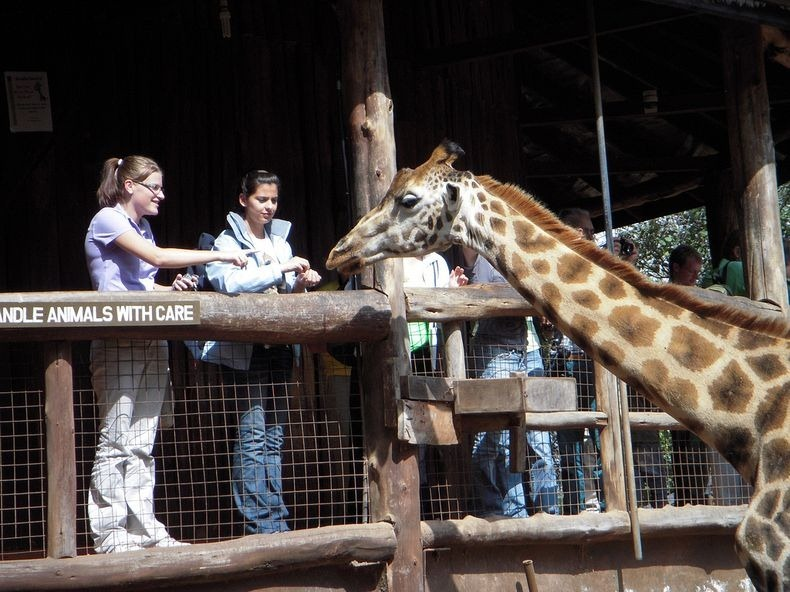 giraffe-manor-13[2]