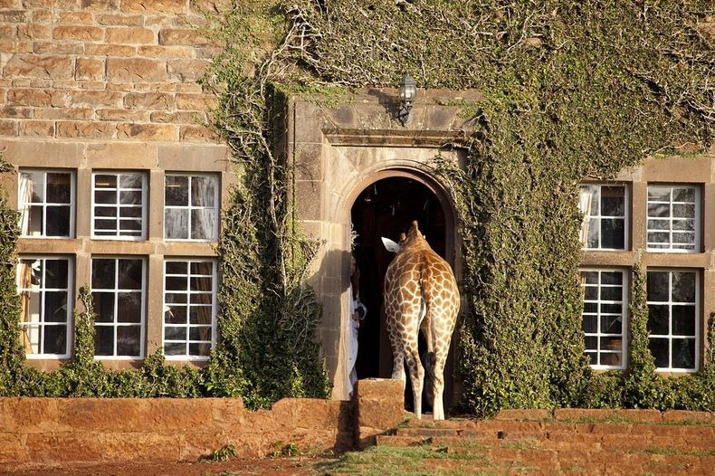 giraffe-manor-2[2]