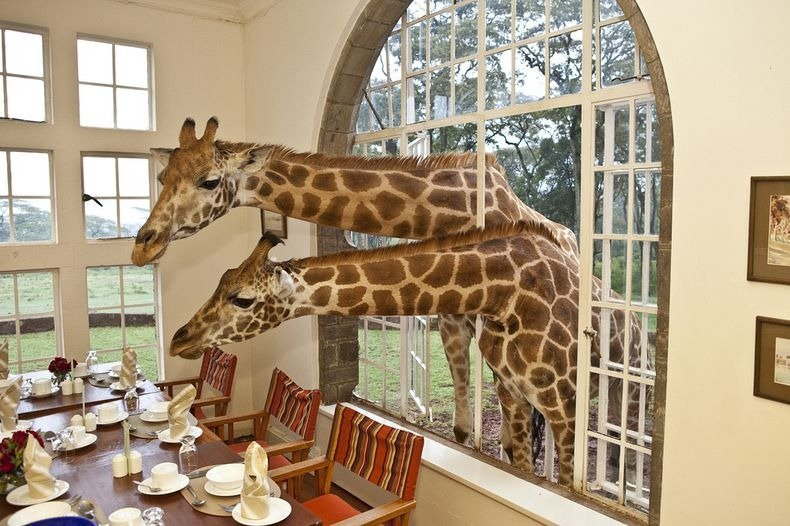 giraffe-manor-3[6]