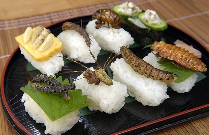 insects-as-food